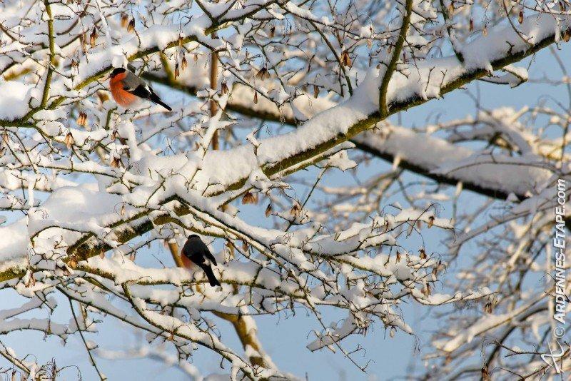 Prachtige sneeuwfoto gemaakt in de Ardennen. Bron: Ardennes Etape.