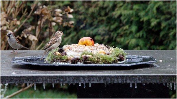 IJstaart voor de vogels in Groningen. Foto is van Carla Voort.