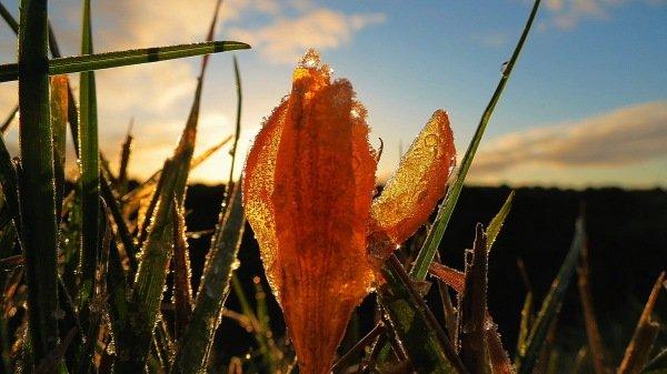 Fraaie macrofoto van lentebloeiers en zonneschijn. Foto is van Jannes Wiersema.