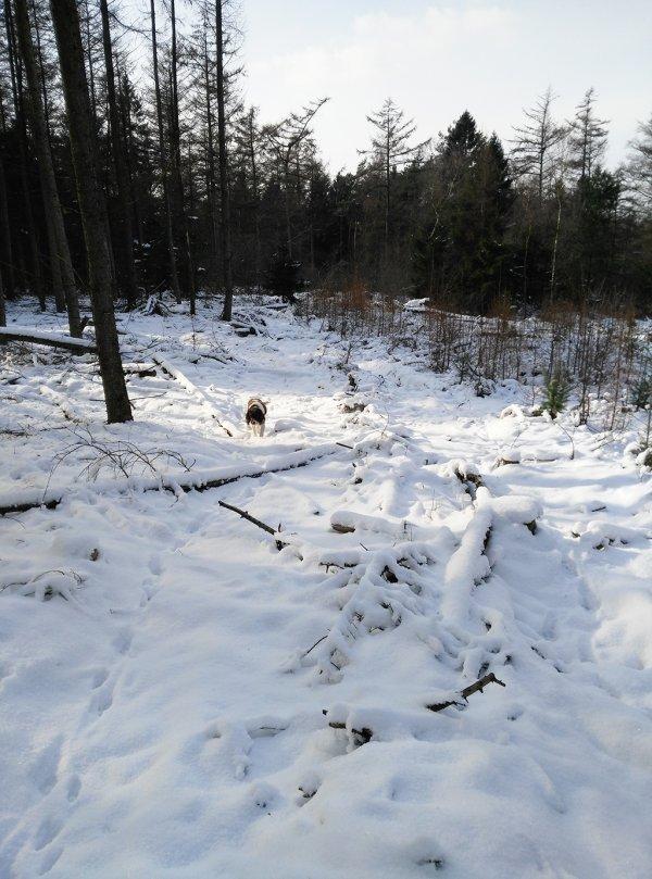 In het Montferlandse bos in het oostelijk deel van de provincie Gelderland ten zuiden van Doetinchem ligt nog een gesloten sneeuwdek van 10 cm. In genoemd gebied komen 'bergen' voor tussen de 66 en 92 meter hoogte. Foto is van Bart Harmsen via weerwoord.be