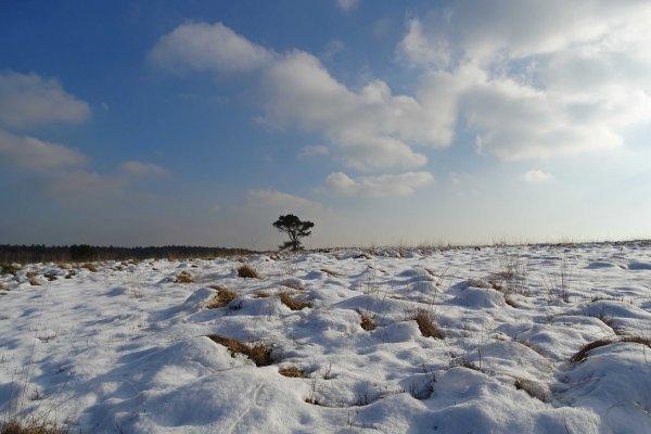 Er ligt nog een mooi laagje sneeuw op de Elsberg bij Laag-Soeren. Foto via Weerwoord.be van Bart Pijper