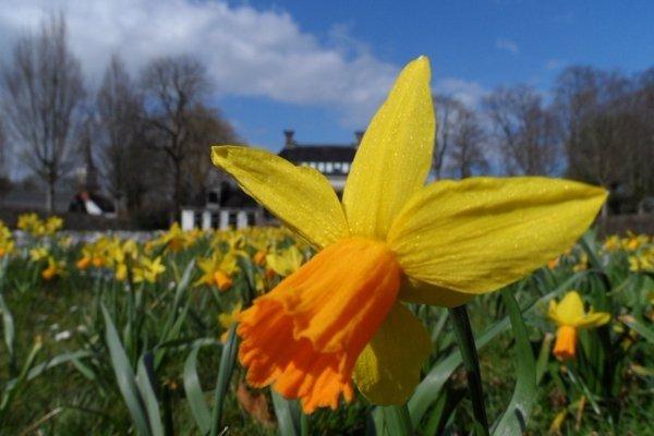 Ook dit is een fraaie lentefoto gemaakt door Bram van Zanten.