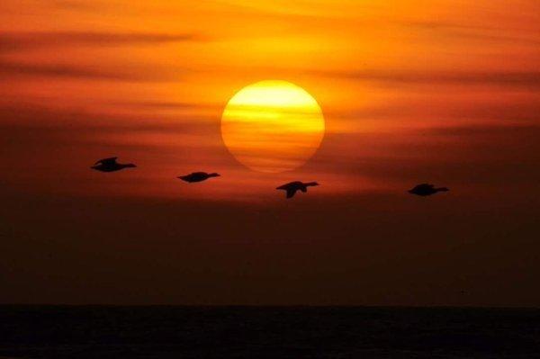 Evert-Jan Woudsma maakte deze schitterende foto van de zonsondergang in Castricum.