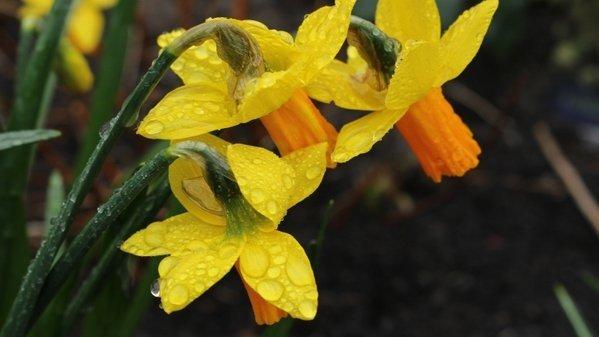 De lente is gisteren treurig begonnen met vrij veel bewolking en af en toe (mot)regen. Foto is van Martin Vye.