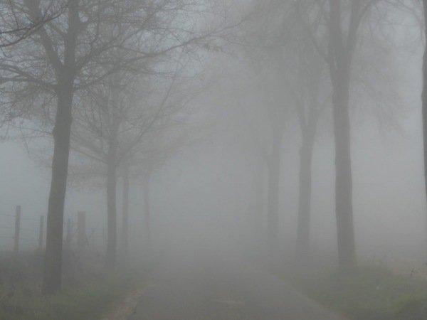In Limburg kwam geruime tijd nevel en mist voor zoals op deze foto van Marij Bouwers goed is te zien.