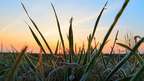 De zon kwam weer fraai op met daarbij lichte vorst. Foto is van Jannes Wiersema.