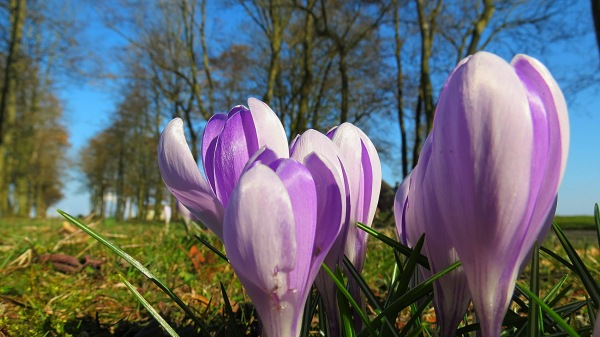 het is prachtig lenteweer dit weekend. Deze treffende foto werd gemaakt door Jannes Wiersema.