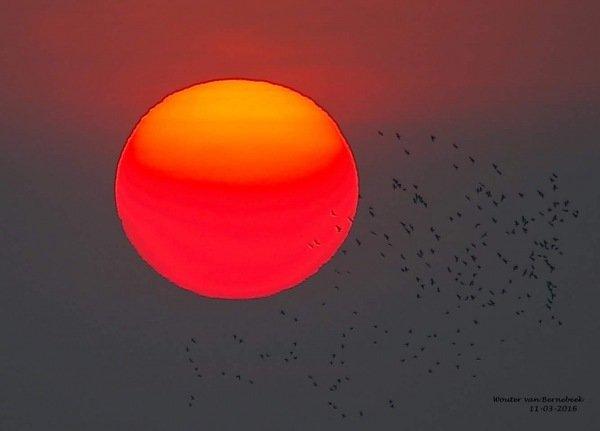 AWM collega Wouter van Bernebeek maakte deze zeer fraaie foto van de ondergaande zon.