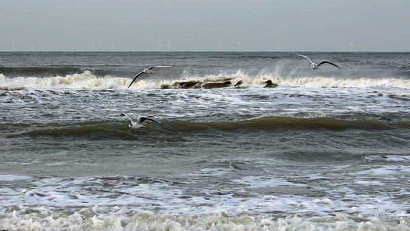 gisteren stond er nog vrij veel wind, maar de komende dagen is het wat dat betreft een stuk rustiger. Foto: Sjef Kenniphaas.