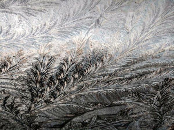 Fraaie ijsbloemen. Foto gemaakt door Dennis de Bruin