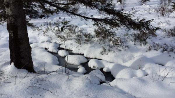 Sneeuw bij Mont-Rigi. Foto is van Klaas Boersma via Twitter @klaaswillemb