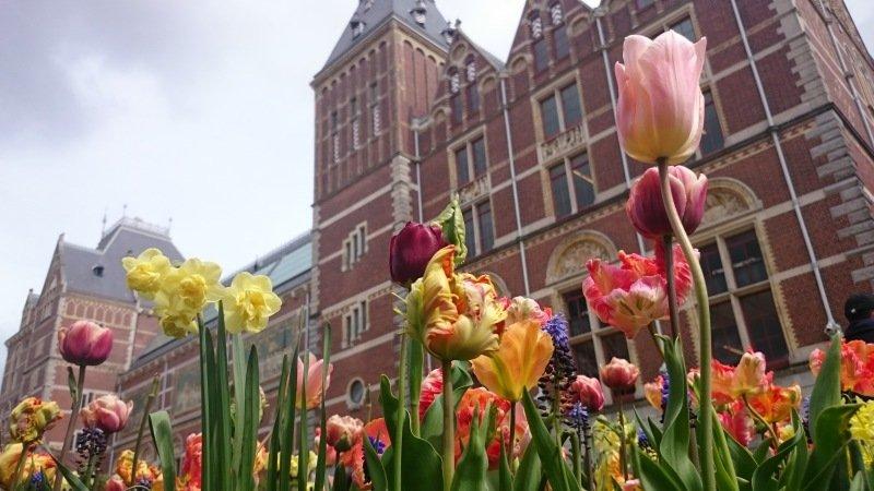 Een dagje Amsterdam gisteren. Fraaie tulpen in de museumtuin van het Rijksmuseum. Foto maakte ikzelf.