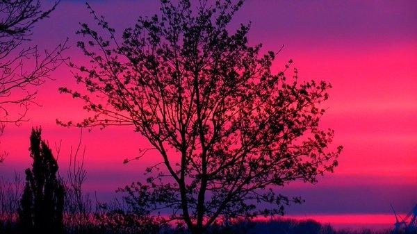 Het was gisteren een gekleurde zonsopkomst. Ochtendrood, water in de sloot. Foto is van Jannes Wiersema.
