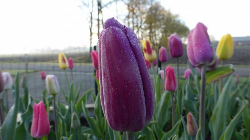Truus Linders maakte deze mooie lentefoto in Nederweert.