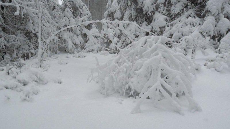 Roland Nicolai uit Maastricht ging gisteren naar de Hoge Venen en trof daar een sneeuwdek aan van 22 centimeter.