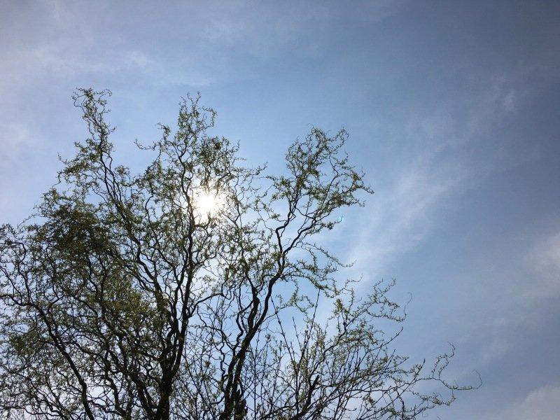 Ook Esther van der Plaat maakte een fraaie foto van de al iets gesluierde zon.