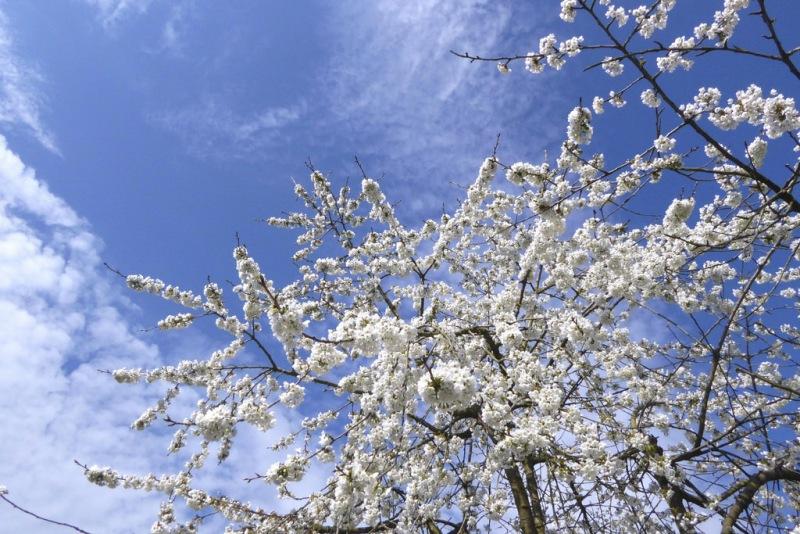 Wederom een echte lentefoto. Deze werd gemaakt door Piet Vinken in het Limburgse Echt.