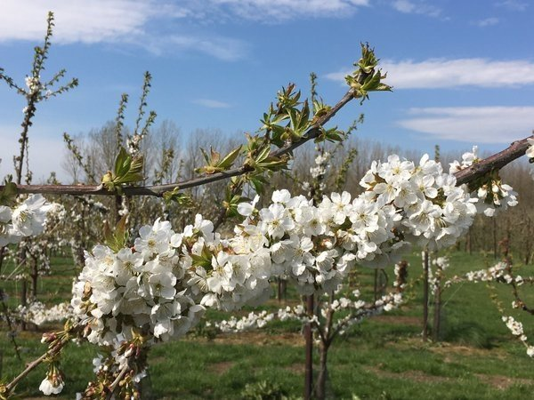 het was gisteren een prachtige lentedag. Deze foto ontvingen we van Peter Vanmechelen uit het Vlaamse Tienen.