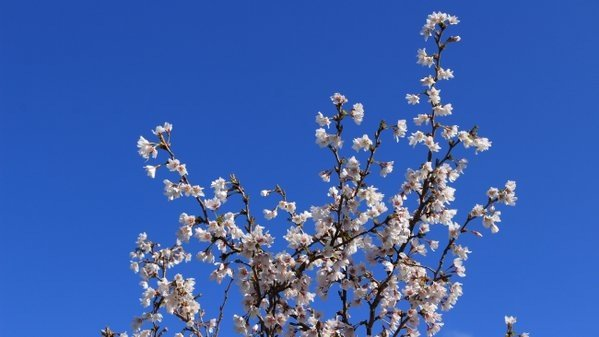 Prachtige lentefoto van Martin Vye.