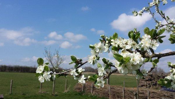 Mooie lentefoto van Paul Begijn.