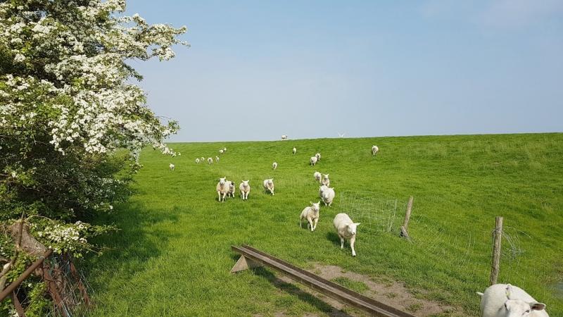 In grote delen van het land was het gisteren prachtig weer met volop zon. Deze foto werd gemaakt door Jannes Wiersema.