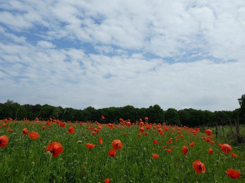 In Limburg waren gisteren de meeste zonuren te vinden. Deze foto werd gemaakt door Roos Vaessen