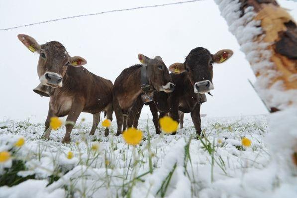 Neuschnee lente