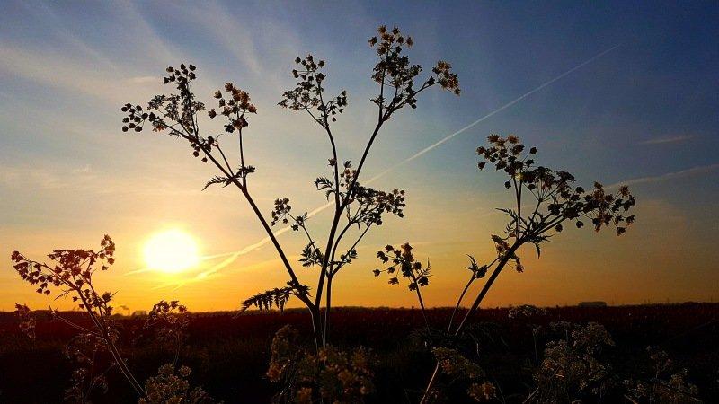 In het noorden begon de dag al met zonneschijn en dat bleef vrijwel de hele dag zo. Foto is van Jannes Wiersema.