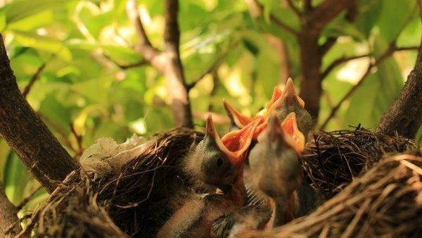 opnieuw een lentefoto in optima forma. Deze pasgeborene schreeuwen om eten... Foto is van Martin Vye.