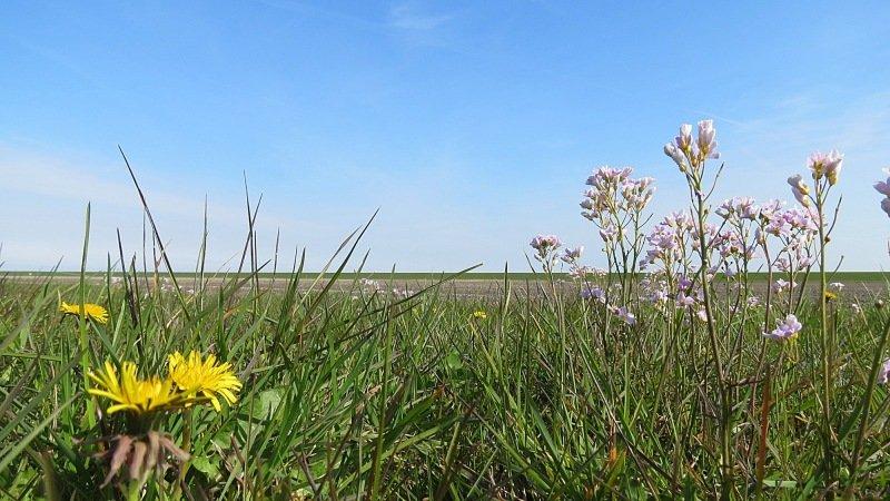 Het gras gaat komende week bloeien en dat is niet zo goed nieuws voor mensen met hooikoortsklachten. Foto is van Jannes Wiersema.
