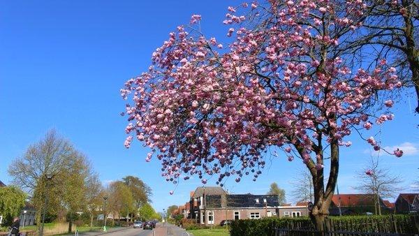 Het was gisteren al een hele fraaie dag met flink wat zonneschijn. Deze prachtige lentefoto werd gemaakt door Martin Vije.