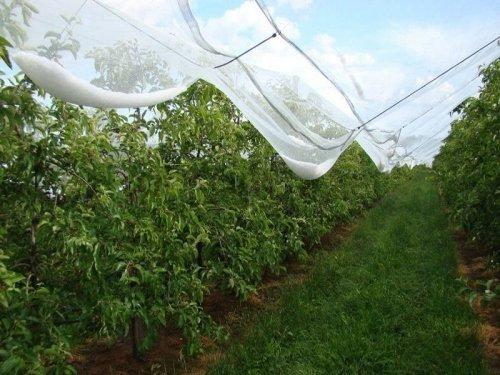 Voorbeeld van een hagelnet over fruitbomen. Bron: Howitec