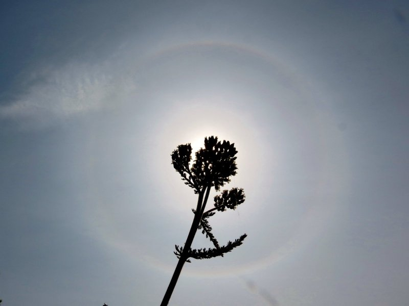 In de hoge bewolking was gistermiddag een fraaie halo zichtbaar. Foto is van Ton Wesselius