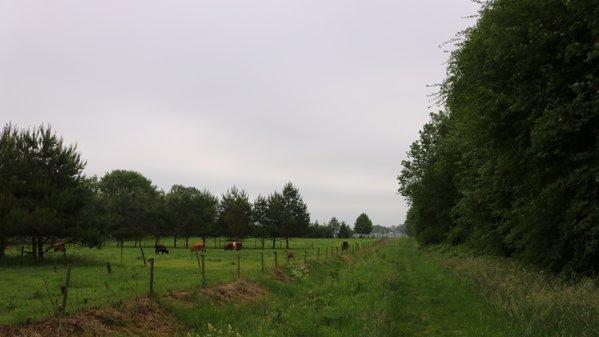 In het overgrote deel van het land was het gisteren grijs en bewolkt. Deze foto werd gemaakt door Martin Vye.