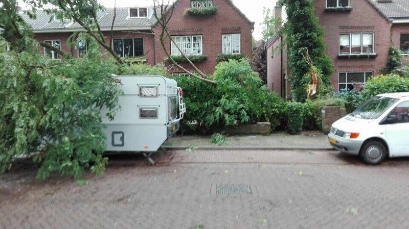 Omgewaaide bomen in de regio Nijmegen tijdens de onweersbuien van gisteravond.
