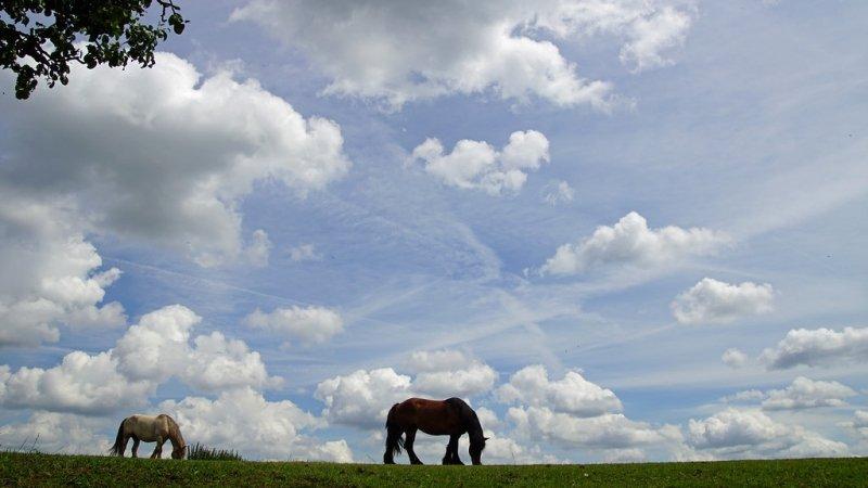 in het zuiden van het land kwamen stapelwolken en sluierwolken voor. Foto: Mariet Joosten
