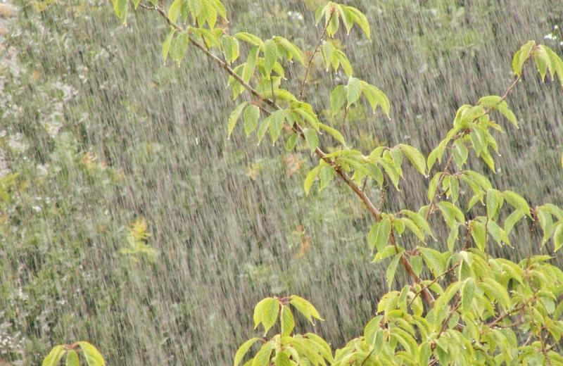 De regen fraai vastgelegd door Ton Wesselius.