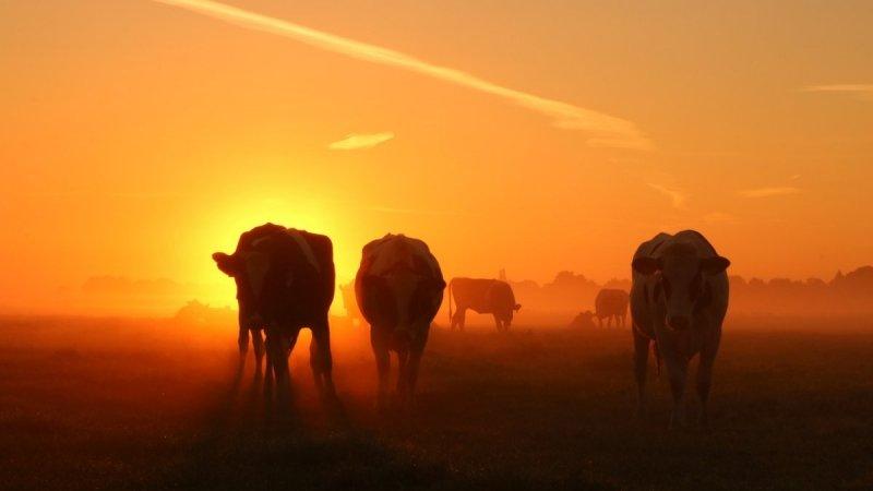 De laatste dag van de zomer begon gisteren zeer fraai. Martin Vye maakte deze prachtige foto.