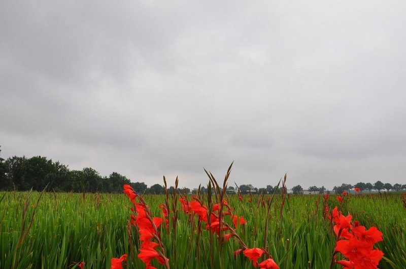 In het zuidoosten van Brabant waren meer wolken en kwam het zelfs nog tot een buitje. Foto werd gemaakt door Ben Saanen.