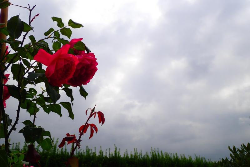 het was gisteren lange tijd bewolkt. Deze foto gaf een beetje kleur aan de dag. Foto: Elly Muijsers