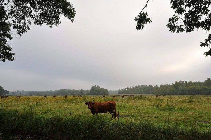 Ben Saanen @BSaanen 24 sec.24 seconden geleden Cranendonck, Nederland @BuienRadarNL de zon laat nog op zich wachten in zuidoost Brabant vanochtend