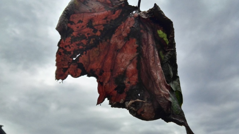 dit weekend lijkt het wel herfst. De treffende foto is gemaakt door Joyce Derksen.