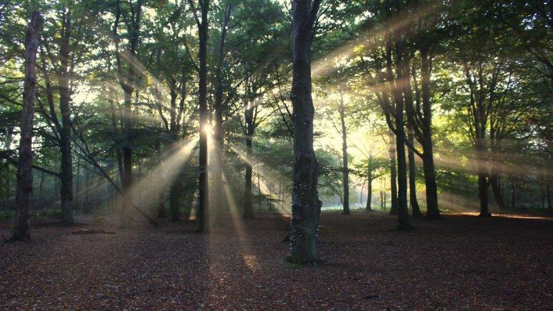 In deze tijd van het jaar kan je ook hele mooie foto's maken en dat bewijst Martin Vye.