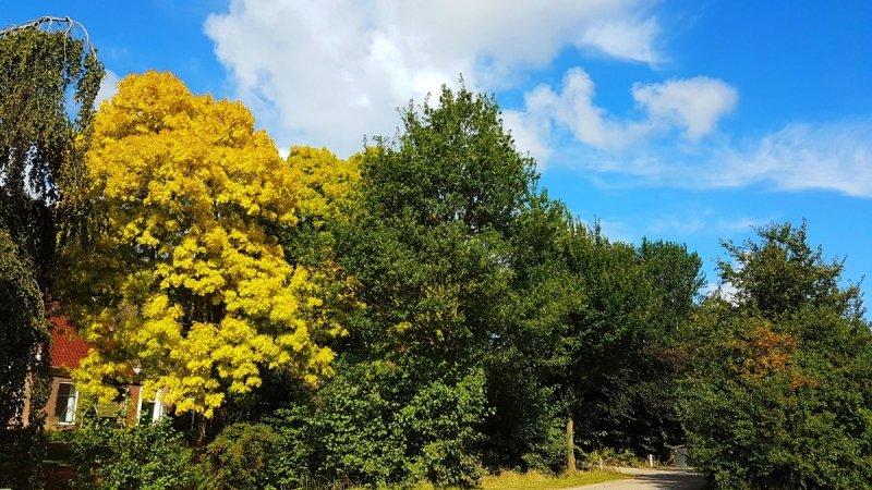 Geleidelijk begint de natuur te verkleuren. Foto is van Jannes Wiersema.