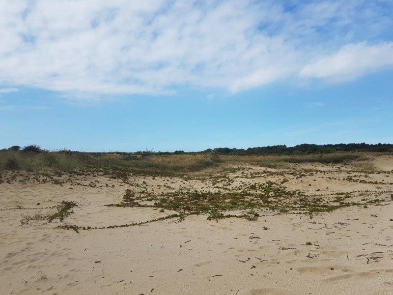 Gisteren waren er wolkenvelden, maar in het noordwesten scheen de zon. Deze mooie foto werd gemaakt in de duinen door Evert-Jan Woudsma.