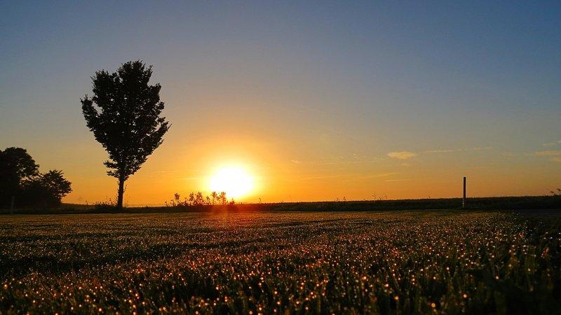 De zon kwam gisteren fraai op op de aanwezige dauwdruppels. Foto is van Jannes Wiersema