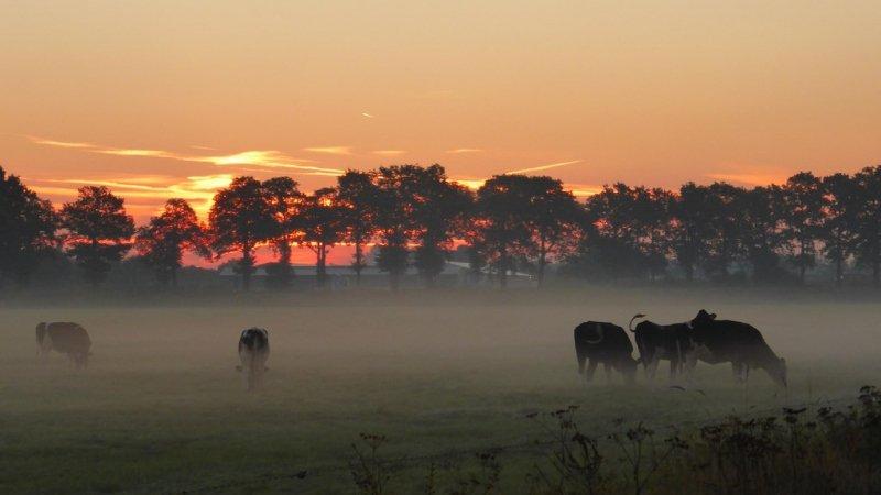 De zon kwam gisteren ook weer fraai op getuige deze zeer mooie foto van Truus Linders