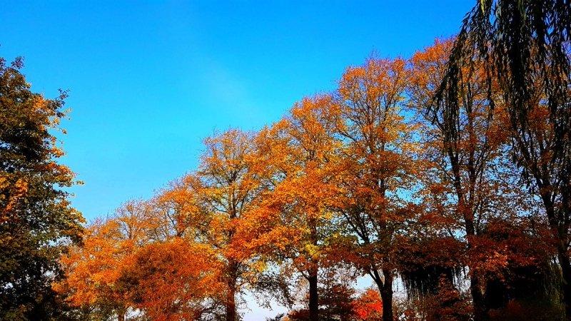 prachtig weer in het noorden van het land. Deze schitterende herfstfoto werd gemaakt door Jannes Wiersema.