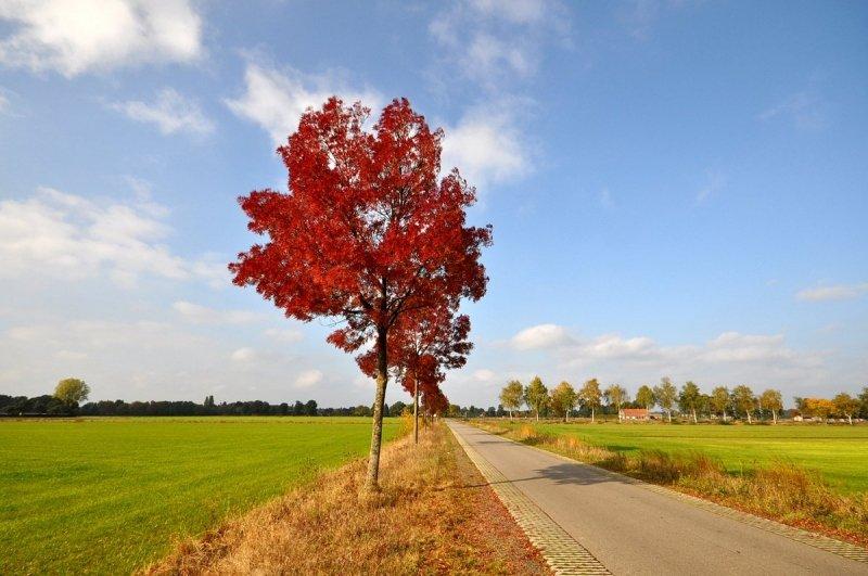 prachtige herfstfoto gemaakt door Ben Saanen op een vrij zonnige zaterdagmiddag