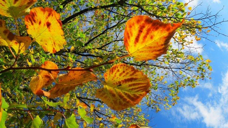mooie herfstfoto van Jannes Wiersema.